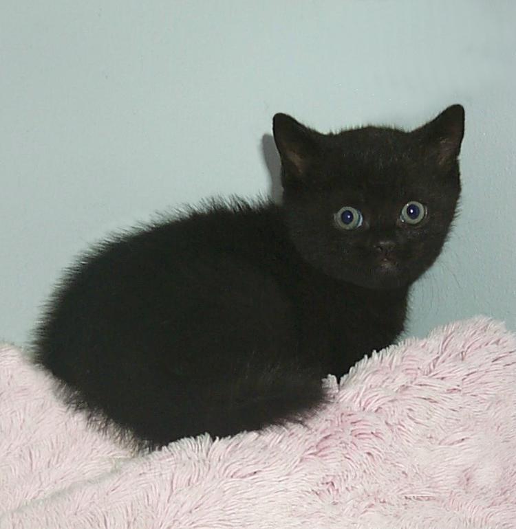 Foto's van 10 zwarte kittens - Hart Voor Dieren